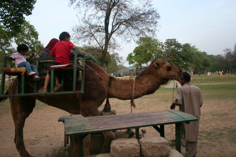 Children Camel Riding at Islamabad Zoo