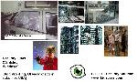 Security Management - CCTV Security System